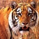 صور حيوانات روعة 40.jpg
